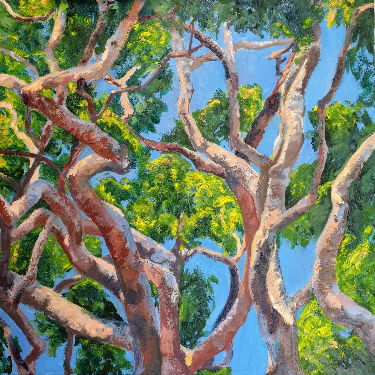 """Angophora,"" oil on canvas, 16x61 cm, 24x24 inches, private collection, New York City, USA"